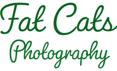 Fat Cats Photography